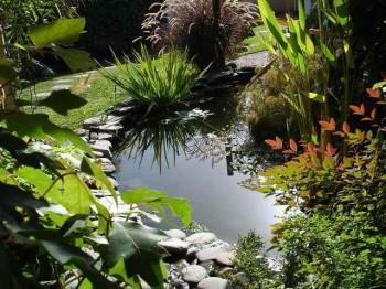 вода в саду