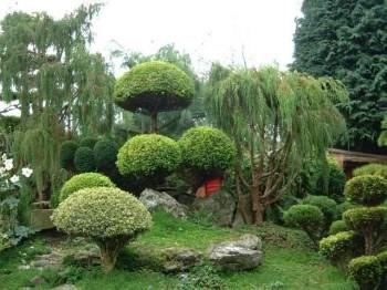 растительность японского сада