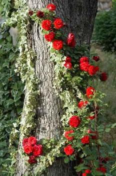 природная опора для цветов