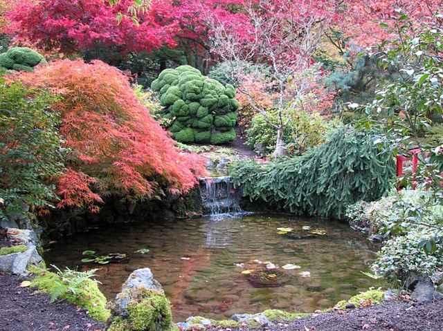 Декоративные растения в саду