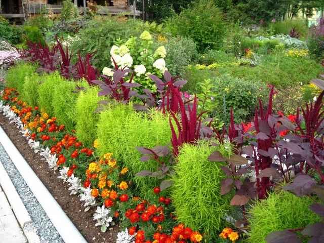Декоративные садовые цветы и их