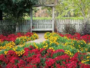 растения для палисадника