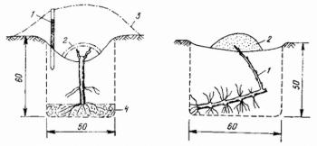 сохранение растений в зимний период