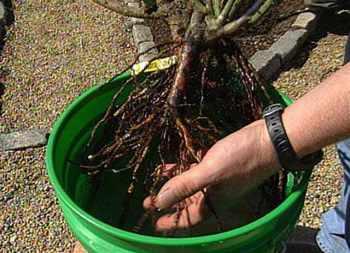 подготавливаем растения к зимовке