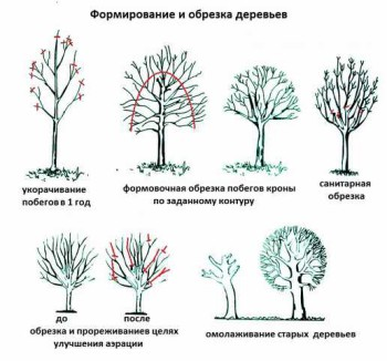 обрезка по видам плодовых деревьев