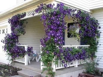 как выбрать растения для сада