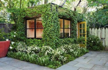 плетущиеся лианы для сада